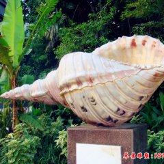 植物園玻璃鋼仿真海螺雕塑
